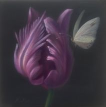 Purple tulip2